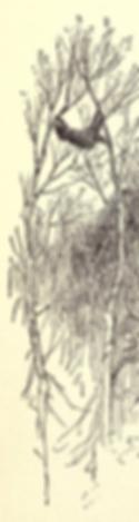 ヤマアラシ10のコピー.png