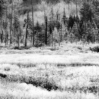 snowfield.jpg