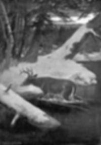 動物の外科手術(1) トップ画像.jpeg