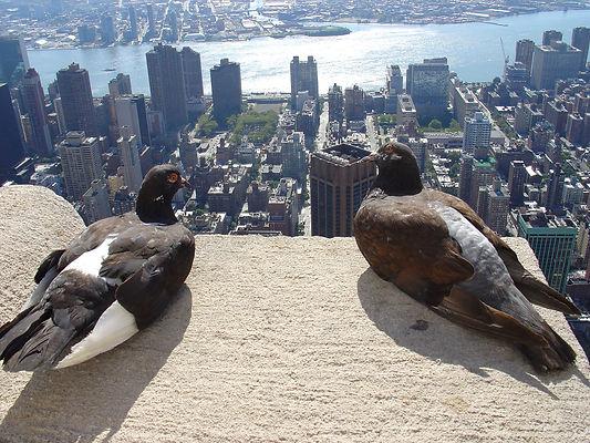 Pigeon Morning.jpg