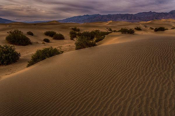 mesquite dunes death valley_1.jpg