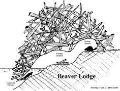 A beaver lodge02.jpg