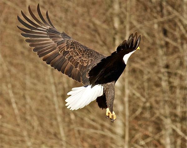 eagle Jerry Mcfarland.jpg