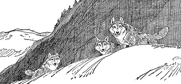 wolfs mono.png