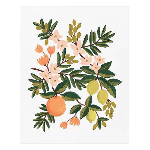 "Citrus Floral Illustrated 16""x20"" Art Print"