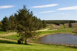 Greenwood Loch - Activity Pond