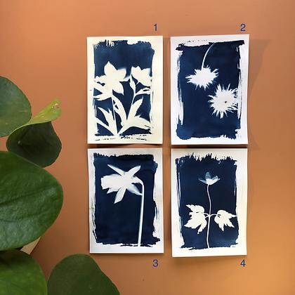 Cyanotype Fleurs du jardin format A6