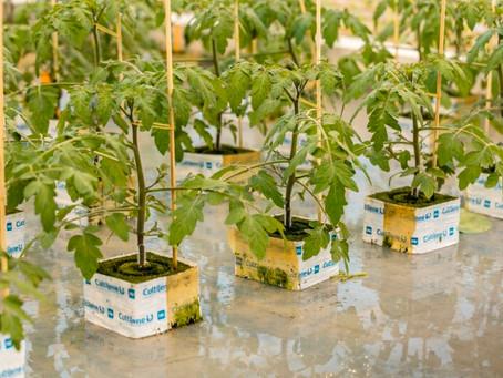 Plantenkwekerij Gipmans kiest voor Ozon