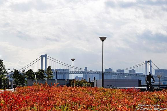 Новая Планета, или о том, как я провела в Токио 7 дней. Часть 1