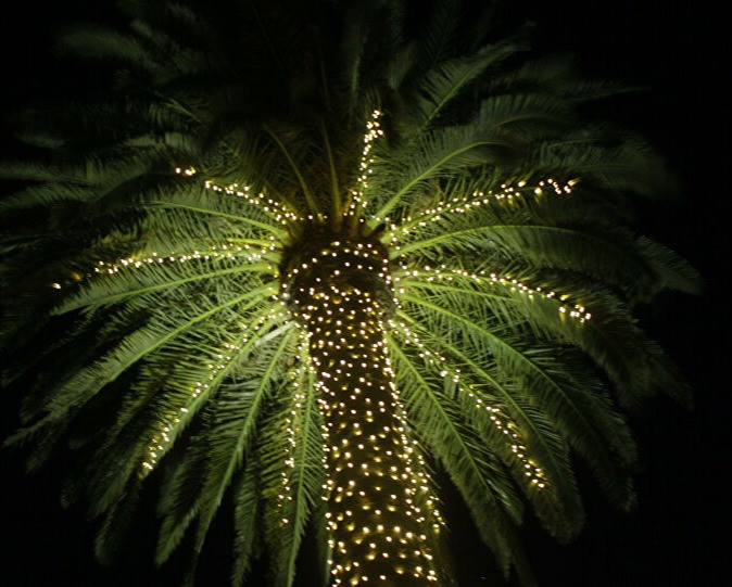 Soft White Palm Tree LED Wrap