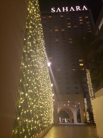 LED Light Wall and Palm Tree Wrap