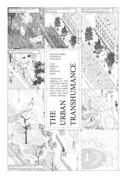 The Urban Transhumance
