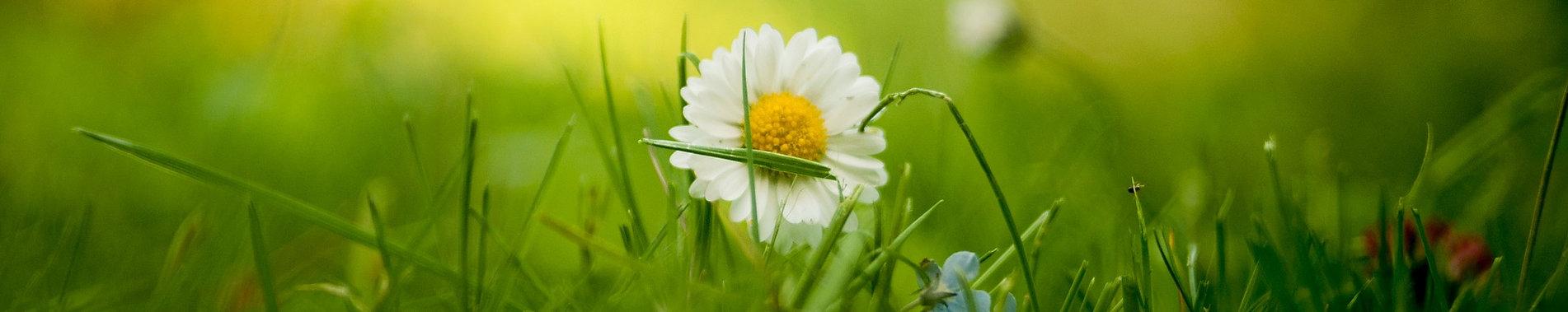 bloom-1834912_1920.jpg