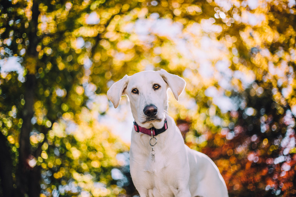 Lifestyle portrait of a pet dog in the fall