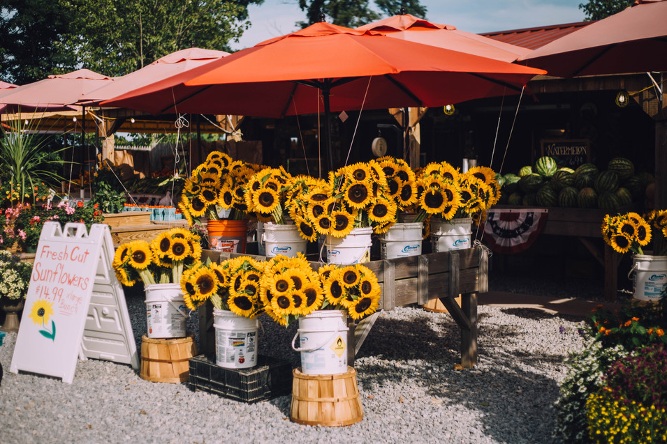Lifestyle photo of sunflower farm stand