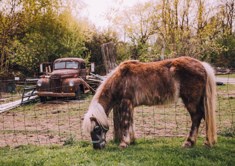 Lifestyle image of Benner's Farm