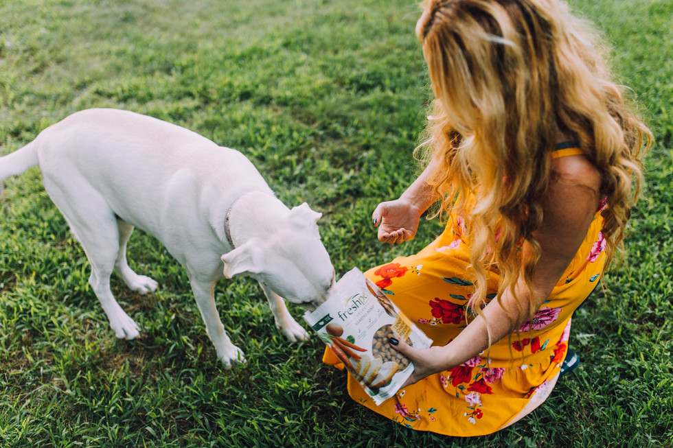 Commercial photo of a dog food