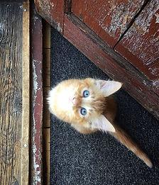 Pet photogaphy