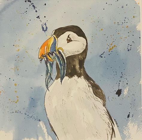 """Puffin Sketch"" Watercolour 12""x12"" £49"