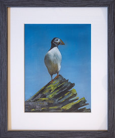 """""""Puffin Lookout"""" 12.5""""x15"""" Oil £90"""