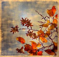 Fleurs d''automne.jpg