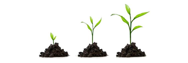 secret to scaling customer success