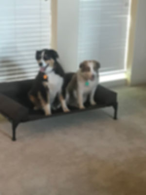 Boogie and Charlie Place