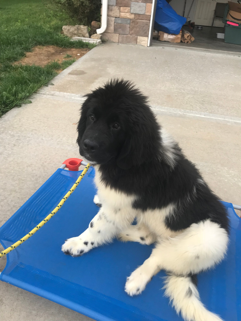 Dog Behavior Training Basehor