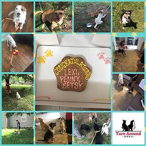 Multiple Dogs Training