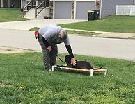 Kansas City Dog Trainer