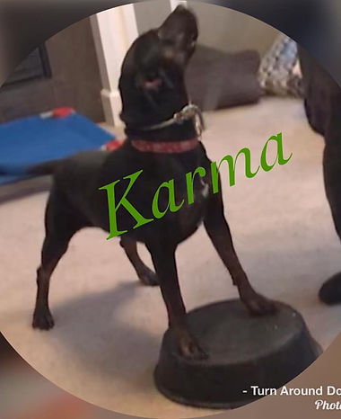 Kansas City Dog Training