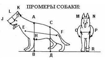 Промеры собаки