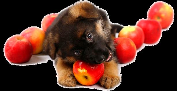 овчаренок и яблоки.png