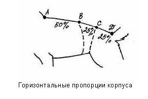 Горизонтальные пропорции корпуса