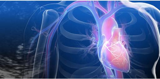 Conoce las 8 principales enfermedades cardiovasculares