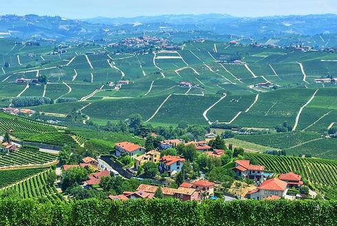 italian wine field.jpg