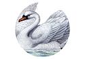 White Swan Market