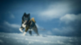 balance4dogs Hundefotografie
