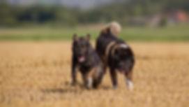 balance4dogs Hundeschule