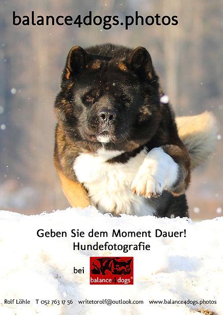 Fotogutschein balance4dogs