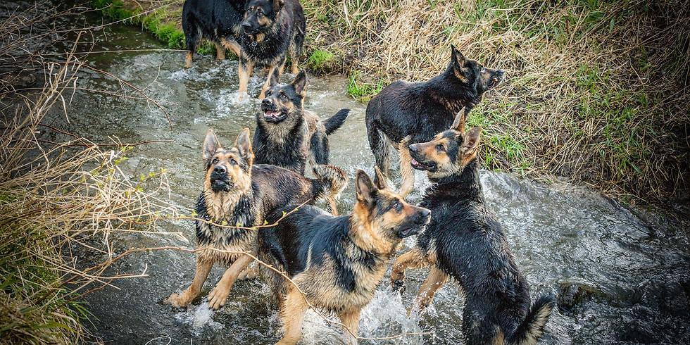 Seminar Hundeerziehung 14. - 16. Juni
