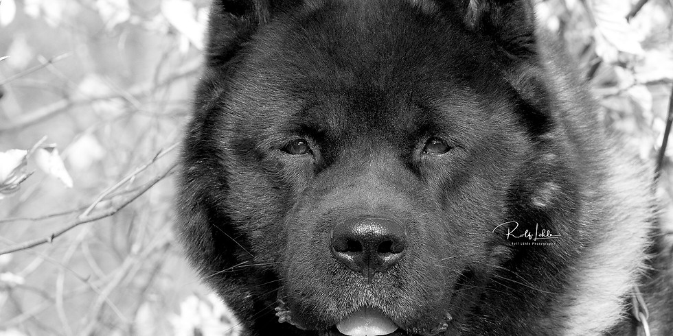Seminar Hundeerziehung 26. - 28. Juni