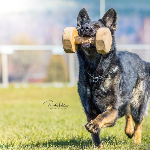 260AHundeschule Mantrailing Hundeerziehung Hundefotografie