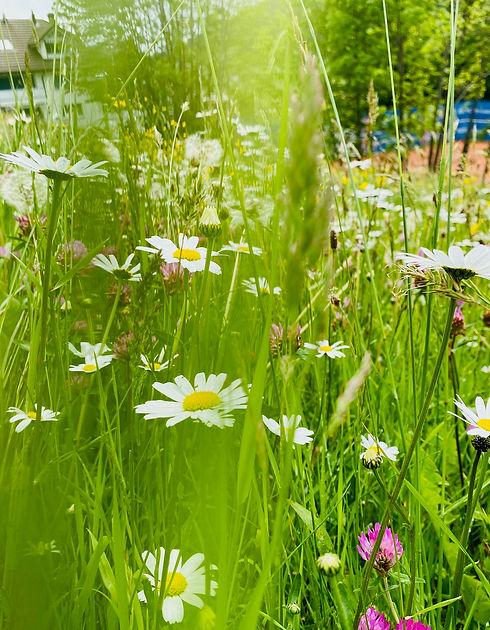 Blumenwiese1.jpg