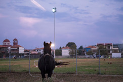 night horse.jpg