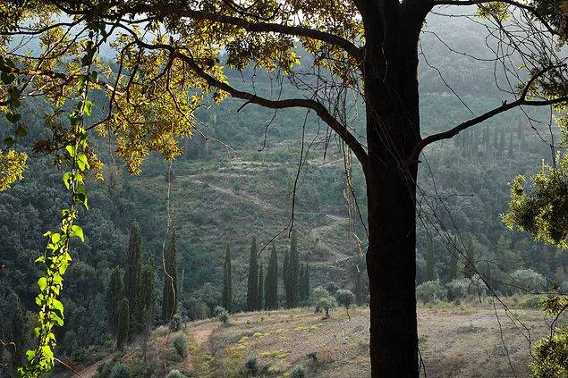forest DSCF1077 b.jpg