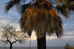 palm light.jpg