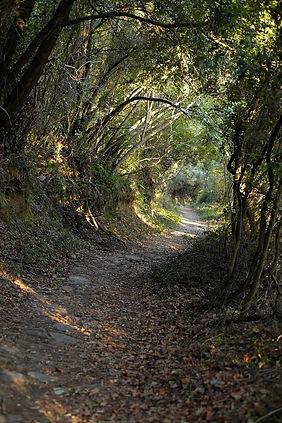 streetForest DSCF1057.jpg