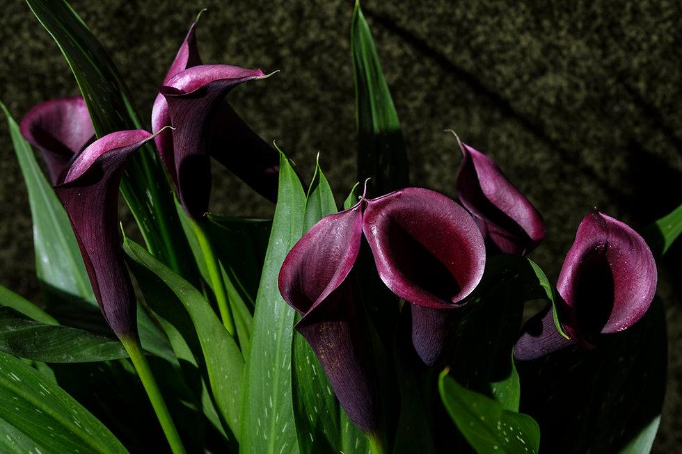 floral kalas.jpg