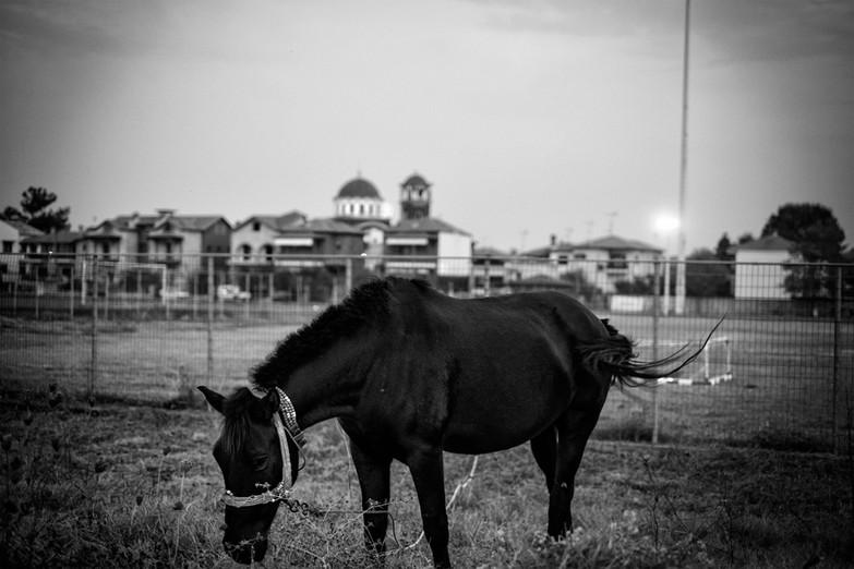 horse .jpg
